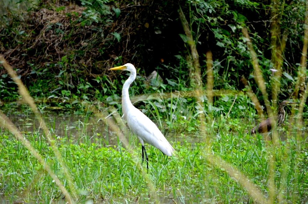 essay on bird sanctuary Miscellaneous essays: how to reach bhartapur bird sanctuary from new delhi.