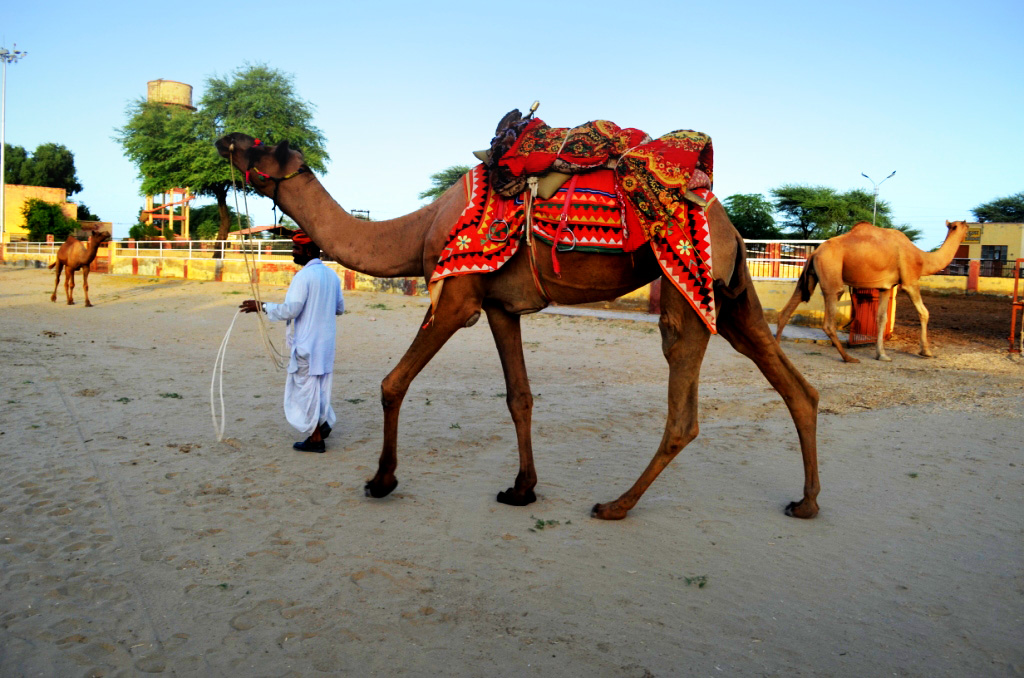 Tried first camel ride of life... what an experience..ahhhh